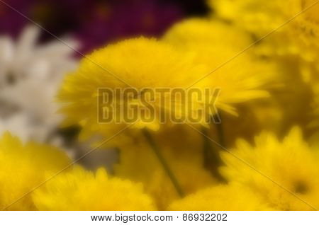 Blurred Seasonal Flowers With Out Of Focus Background