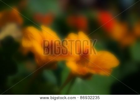 Blurred Seasonal Flowers With Dark Green Background
