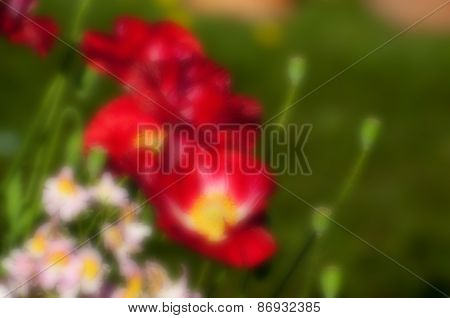 Blurred Seasonal Flowers With Green Background