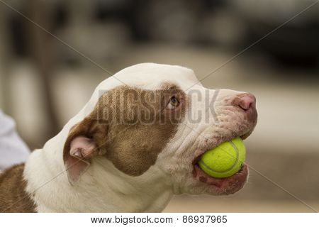 Dog Wants To Play Ball