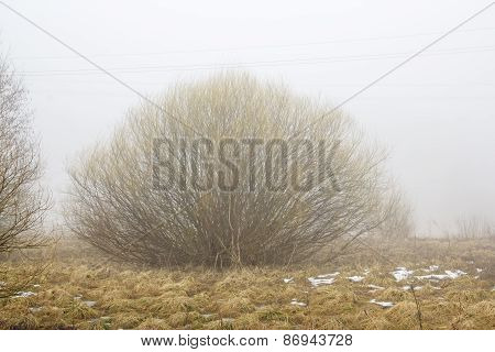 Bush In Fog