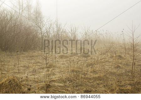 Stalk In Fields