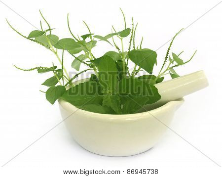Medicinal Herbs On Mortar With Pestle