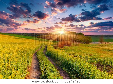 Summer Landscape With A Field Of Yellow Flowers.