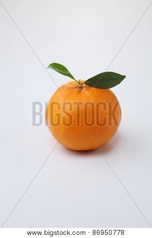 Single mandarin orange on the white background