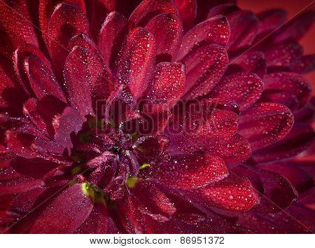 Extreme Macro: Dahlia. Autumn Flower Macro Background.