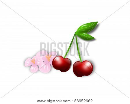 Cherry With Cherry Blossom