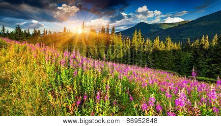 Panorama Of The Mountains With Pink Flowers