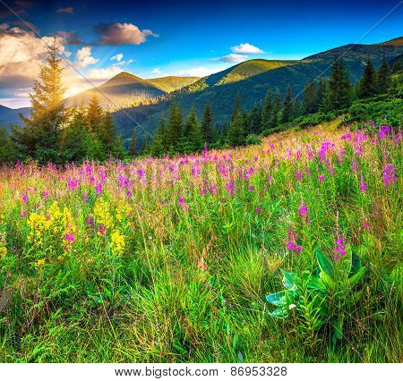 Colorful Summer Morning In The Mountains With Pink Flowers