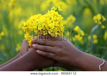 Hands Holding Bunch Of Mustard Flowers