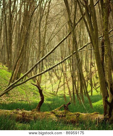 Spring Deciduous Forest With Trees And Green Grass, Nature Background