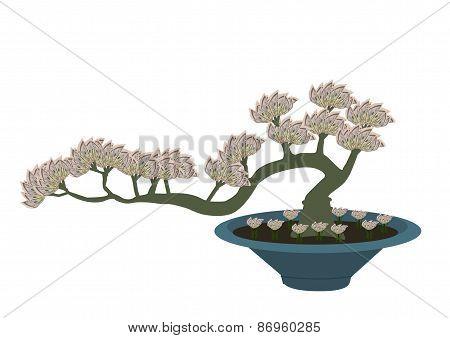 Bonsai Money Tree 01