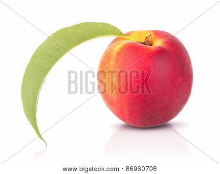 One Ripe Peach On White Background