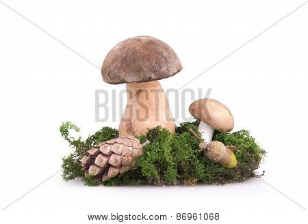 Two Mushrooms With Cones And Acorns