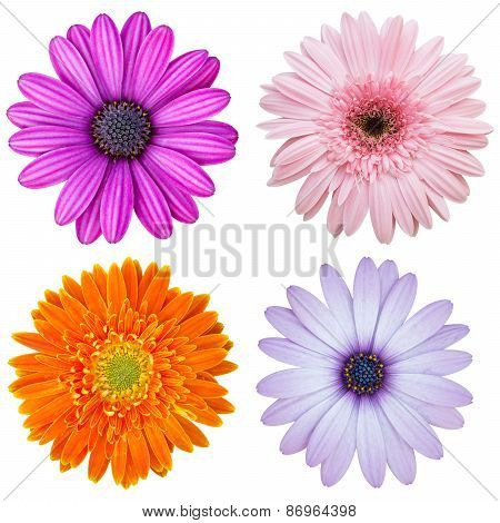 Set Of Colorful Flower Isolated On White With Clipping Path