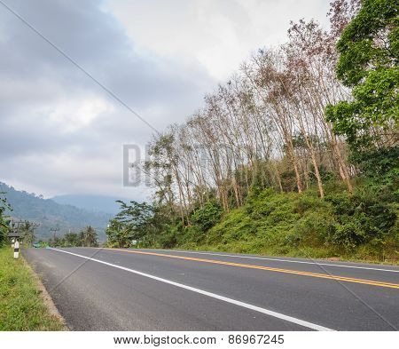 Countryside Road With Fog
