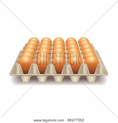 Tray With Eggs Isolated On White Vector