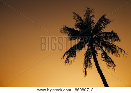 Palm Sunset Silhoutte