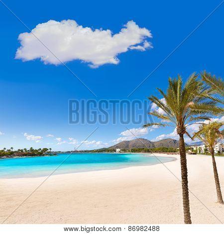 Platja de Alcudia beach palm trees in Mallorca Majorca at Balearic islands of Spain