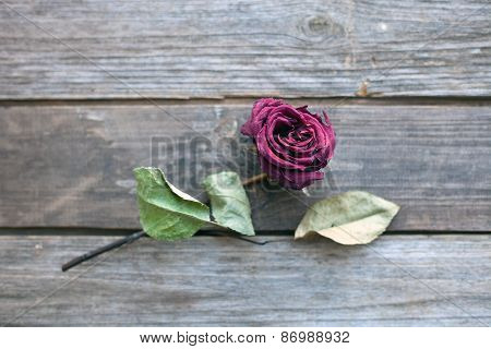 Dried Rose Laying Over Wooden Table