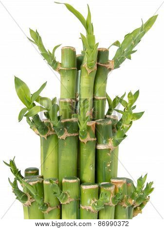 bamboo sticks tight together full