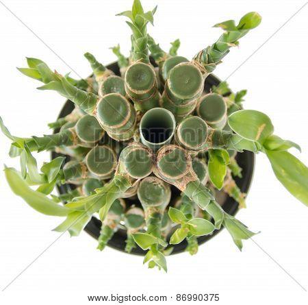 bonsai bamboo sticks tight together