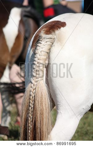 Painted Horse Tail Close Up