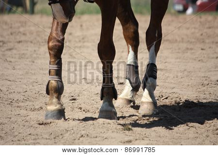 Close Up Of Brown Horse Legs With Boots