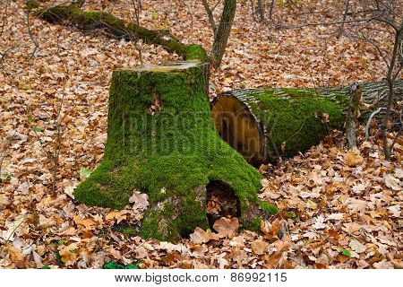 Stump In The Autumn Forest