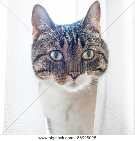 Little Gray Striped Cat