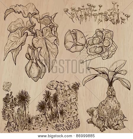 Flowers, Trees, Plants - Hand Drawn Vector Pack