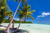 stock photo of palm  - Beautiful tropical beach with palm trees - JPG