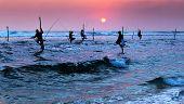 stock photo of fishermen  - Silhouettes of the traditional stilt fishermen at sunset near Galle in Sri Lanka - JPG