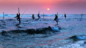 stock photo of fisherman  - Silhouettes of the traditional stilt fishermen at sunset near Galle in Sri Lanka - JPG