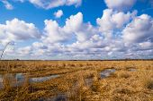 stock photo of groundwater  - Landscape flooded meadows in early spring in nice sunny day - JPG