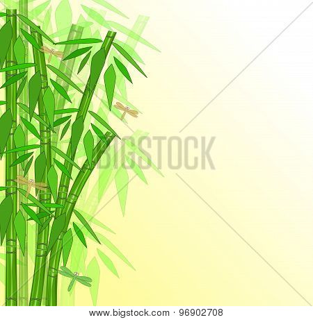 Abstract Bamboo With Place For Text
