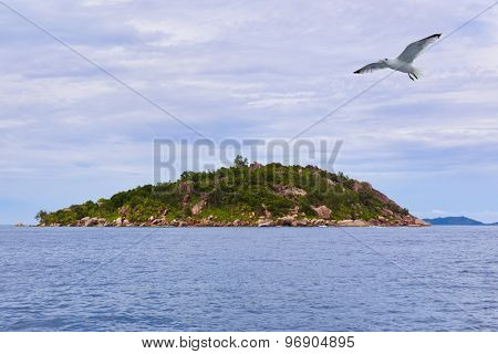 Tropical island La Digue - Seychelles - nature background