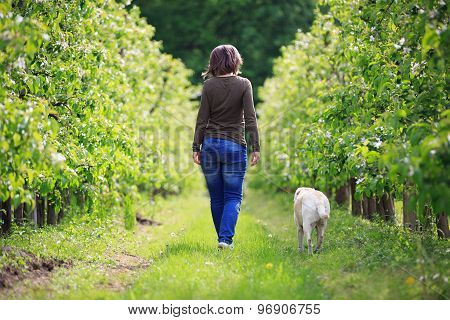 Woman Strolling With Her Dog In The Orchard