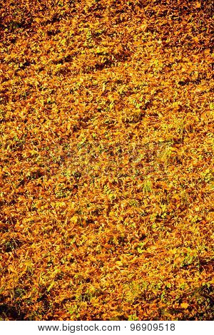 Background Autumn Orange Leaves