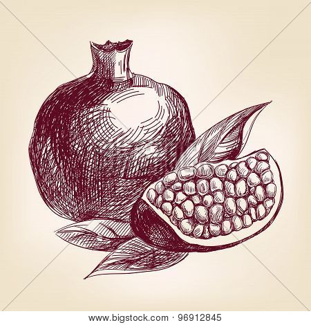 fruit pomegranate hand drawn vector llustration realistic sketch