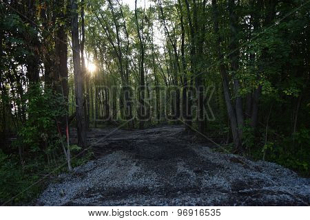 sun break on a logging road
