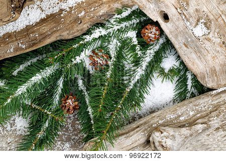 Evergreen Branches And Rustic Driftwood Covered With Snow