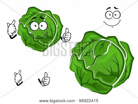 Isolated cartoon green cabbage vegetable