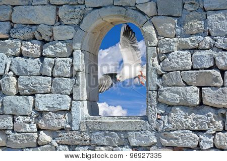 Seagull In The Window Of An Ancient Wall