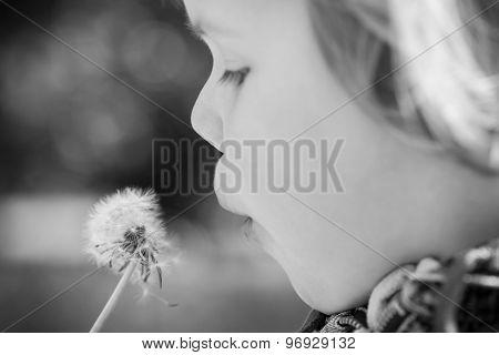 Caucasian Blond Baby Girl And Dandelion Flower