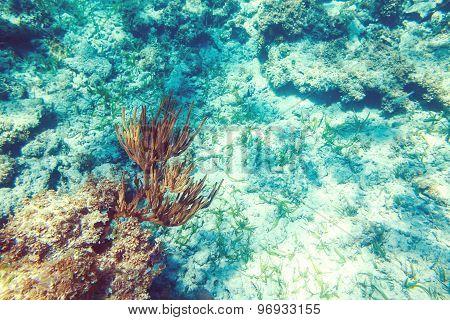 Underwater Coral Reef Background In Caribbean Sea