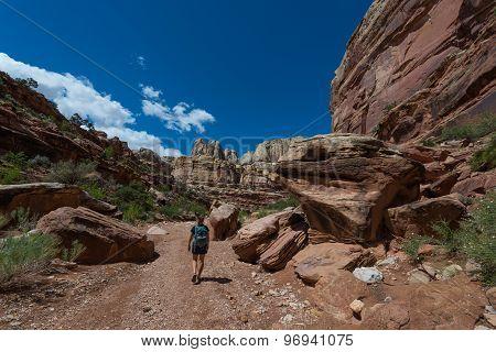 Hiker Backpacker Walking Down The Grand Wash Trail