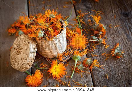 Marigold or calendula officinalis drying