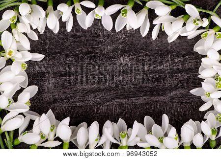 Beautiful snowdrops on a dark wooden background