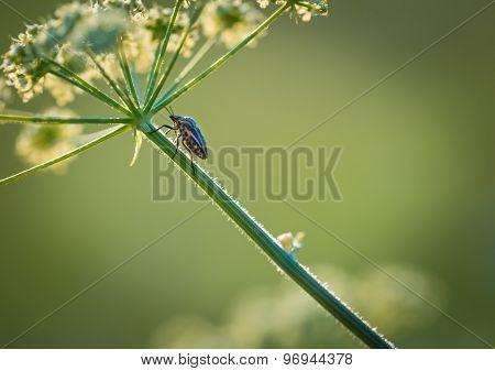Close Up Of Bug Sitting On Plant